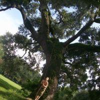 Audubon Park, Live Oak, Марреро