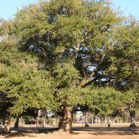 Trees of Forsythe Park, Монро