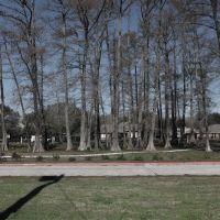 big trees, Морган-Сити