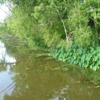 Swamp pictures 3, Морган-Сити