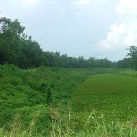Swamp pictures 4, Морган-Сити