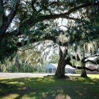 along Bayou Teche in New Iberia, Louisiana (City Park), Нью-Ибериа