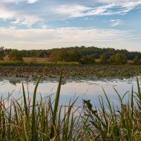 Lake Buhlow, Пайнвилл