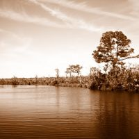 Pearl River, Louisiana, Пирл Ривер