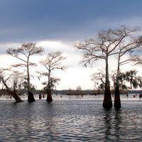 CYPRESS  trees during rain, Чёрч-Пойнт