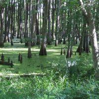 Avoyelles Parish Swamp, Чёрч-Пойнт