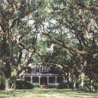 Catalpa plantation, Live Oaks planted in 1814, house built in 1885 (8-9-2000) scanned 35mm, Чёрч-Пойнт