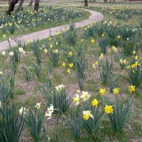 Spring is here - 2010, Шонгалу