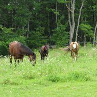 the pasture, Актон