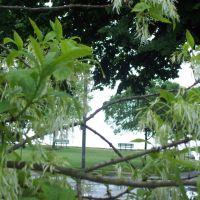 После дождя в Линч-парке..., Беверли