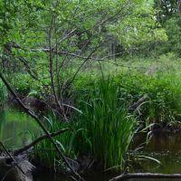 Beaver Brook, Belmont, Белмонт
