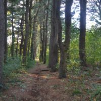 Pine Lined Path, Белмонт