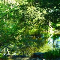 Turtle Pond, Белмонт
