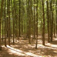 The Trees, Бриджуотер