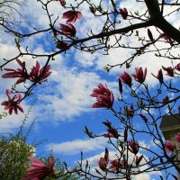 Shrub Blossums on Union St, Bridgewater MA, Бриджуотер