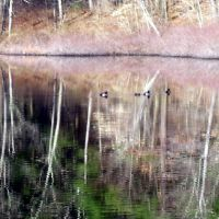 carvers pond 3, Бриджуотер