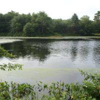 carvers pond 6, Бриджуотер