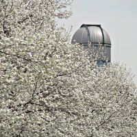 Spring at BU (telescope tower), Бруклин