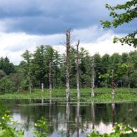Dead Trees at West Hill Dam, Вест-Спрингфилд