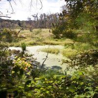Marsh along the trail, Вест-Спрингфилд