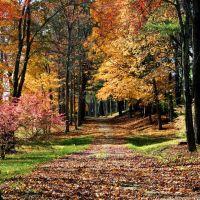 Autumn Hallmark, Дадли