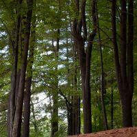Porter Lake Trail, Forest Park, Springfield, Massachusetts, Ист-Лонгмидоу