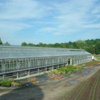 Green house at Wilsons Farm - Lexington, MA, Лексингтон