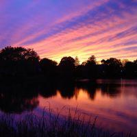 Purple Haze, Линнфилд