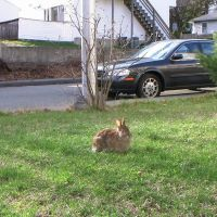 rabbit, Малден