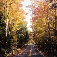 Foliage, Марлборо