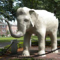 Tufts University, Медфорд
