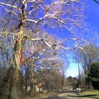 Cool Tree, Метуэн