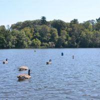 Rosemary Lake, Нидхам