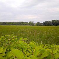 Marsh On The Bike Path, Нортамптон
