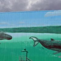 Whales of New Bedford, Оксфорд