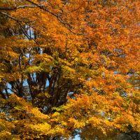 New England Fall, Пибоди