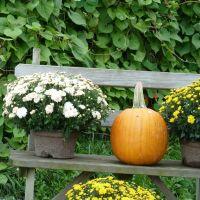 Pumpkin, Питтсфилд