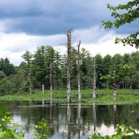 Dead Trees at West Hill Dam, Ревер