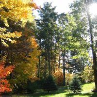 Back Yard, Fall, Ридинг