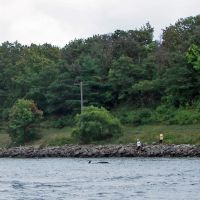 Cape Cod Canal, Pilot Whale, Сагамор