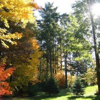 Back Yard, Fall, Сандвич