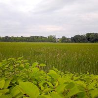 Marsh On The Bike Path, Свампскотт