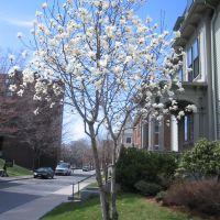 April 2006 027, Сомервилл