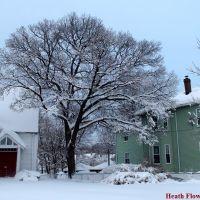 Snow Tree, Уотертаун