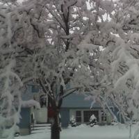 snow tree deb, Фрамингам