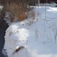 Brook near my apartment on January 31, 2011, Фрамингам