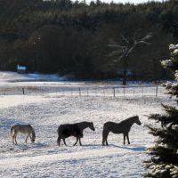 Three horses in the snow in Framingham MA, Фрамингам