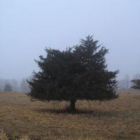 cedar in the fog, Бейпорт