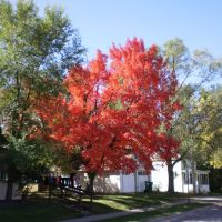 MAPLE TREE SHOWING OFF, Бирон
