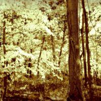 Blufftop forest, Браунсвилл